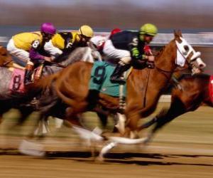 Puzzle de Hípica - Carrera de caballos en el hipódromo