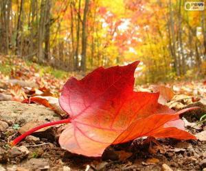 Puzzle de Hoja de otoño