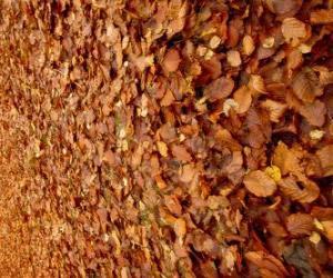 Puzzle de Hojas caídas en el suelo, una típica imagen del otoño