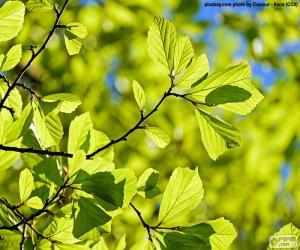 Puzzle de Hojas de árbol
