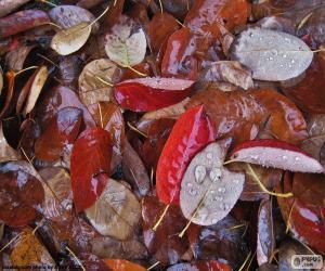 Puzzle de Hojas de otoño mojadas