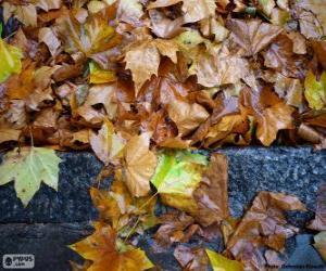 Puzzle de Hojas mojadas después de una lluvia de otoño