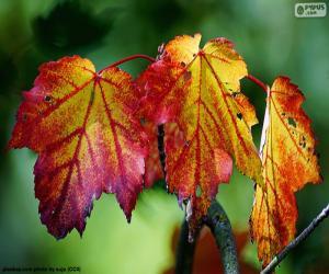 Puzzle de hojas otoñales