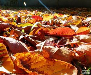 Puzzle de Hojas secas en otoño
