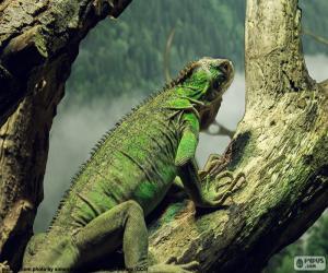 Juegos de Puzzles de Reptiles 3