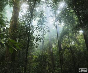 Puzzle de Interior de la selva