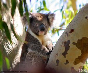Puzzle de Koala en un árbol