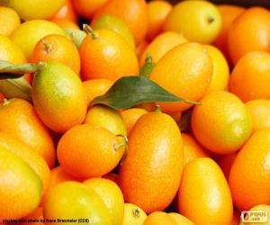 Puzzle de Kumquat