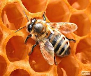 Puzzle de La abeja de la miel. Las abejas que producen la miel