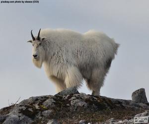 Puzzle de La cabra blanca