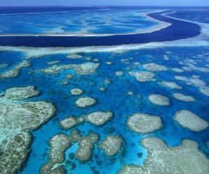 Puzzle de La Gran Barrera, el conjunto de arrecifes coralíferos más extenso del mundo. Australia.