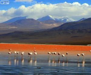 Puzzle de La Laguna Colorada, Bolivia