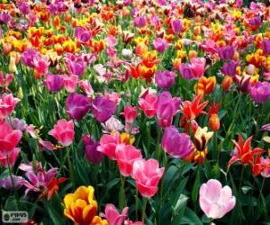 Puzzle de La primavera