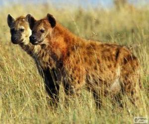 Puzzle de Las hienas