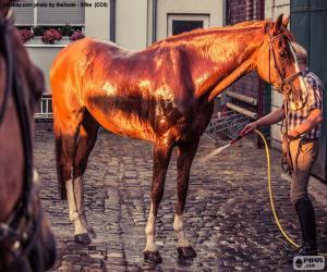 Puzzle de Lavar un caballo