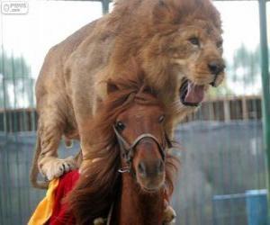 Puzzle de León y caballo realizando su actuación