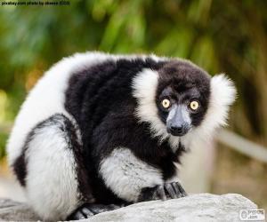Puzzle de Lemur