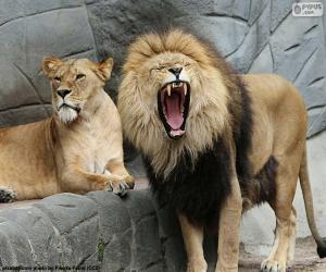 Puzzle de Leona y león