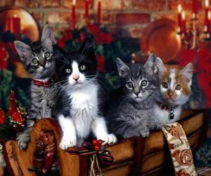 Puzzle de Lindos gatitos el día de Navidad