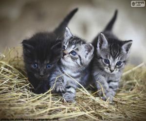 Puzzle de Lindos gatitos