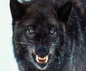 Puzzle de Lobo negro