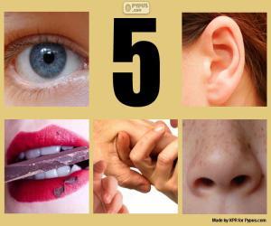 Puzzle de Los cinco sentidos