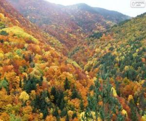 Puzzle de Los colores del bosque en otoño