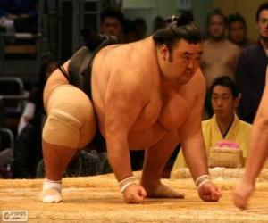 Puzzle de Luchador de sumo preparado para el combate