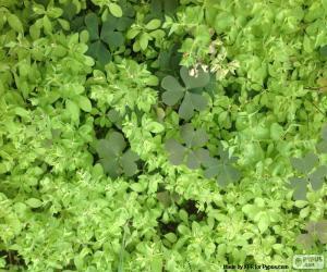 Puzzle de Malas hierbas