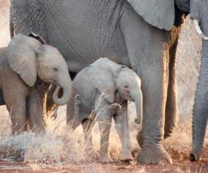 Puzzle de Mamá elefante controlando a sus pequeños