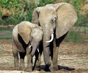 Puzzle de Mamá elefante controlando a su pequeño con la ayuda de la trompa