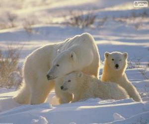 Puzzle de Mamá oso con los cachorros