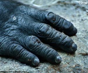 Puzzle de Mano de un gorila