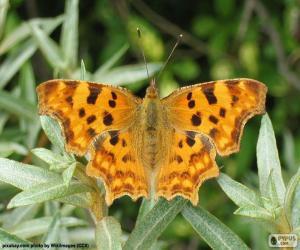 Puzzle de Mariposa alas abiertas