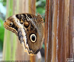 Puzzle de Mariposa búho