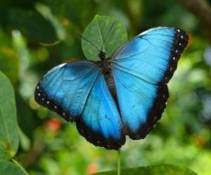 Puzzle de Mariposa celeste