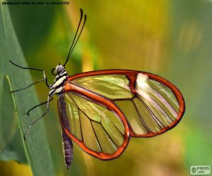 Puzzle de Mariposa de cristal, Greta oto