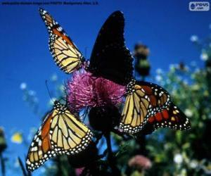 Puzzle de Mariposa monarca