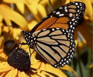 Puzzle de mariposa sobre una flor amarilla