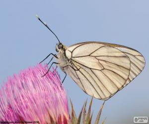 Puzzle de Mariposa sobre una flor rosa