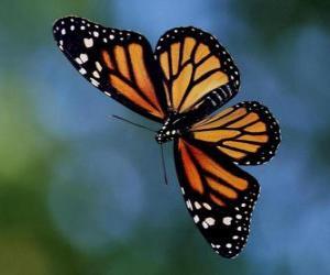 Puzzle de Mariposa volando