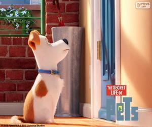 Puzzle de Max delante de la puerta