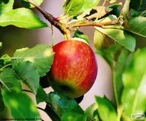Puzzle de Mazana en el árbol