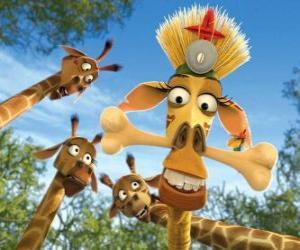 Puzzle de Melman la jirafa, disfrazada bajo la curiosa mirada de otras jirafas