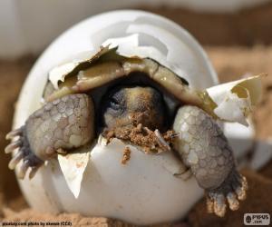 Puzzle de Nacimiento de una tortuga
