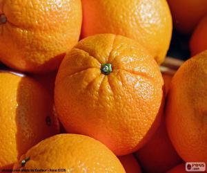 Puzzle de Naranjas
