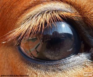 Puzzle de Ojo de caballo