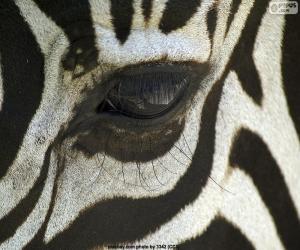 Puzzle de Ojo de cebra