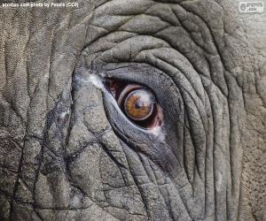 Puzzle de Ojo de elefante