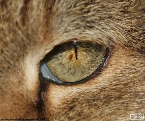 Puzzle de Ojo de gato